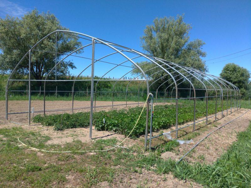 La serra donata dall'azienda Cultiva